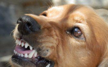 Perché il cane morde quando mi avvicino alla sua ciotola?