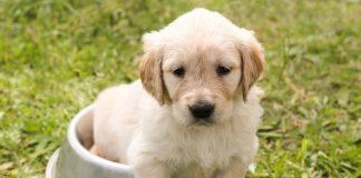 Dermatite nel cane e nel gatto: un binomio che vogliamo evitare