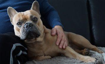 7 errori che commettiamo con il nostro cane