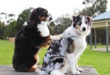 Massaggi per i cani: il rilassamento è d'obbligo