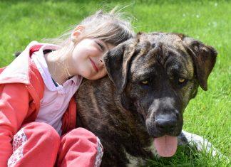 La Pet Therapy: Dove poterla praticare negli agriturismi in Italia