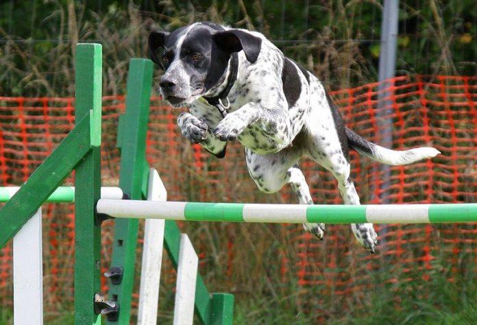 Agility dog: che cos'è e come si pratica