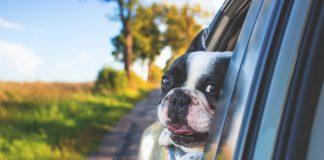 Divisorio auto per cani: quale scegliere