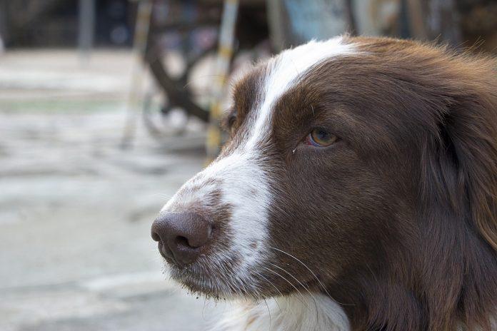 Cosa fare se incontri un cane vagante o ferito