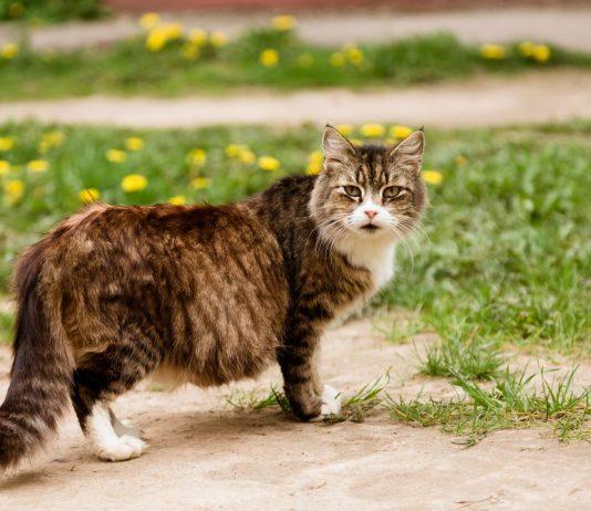 La gravidanza e il parto del gatto