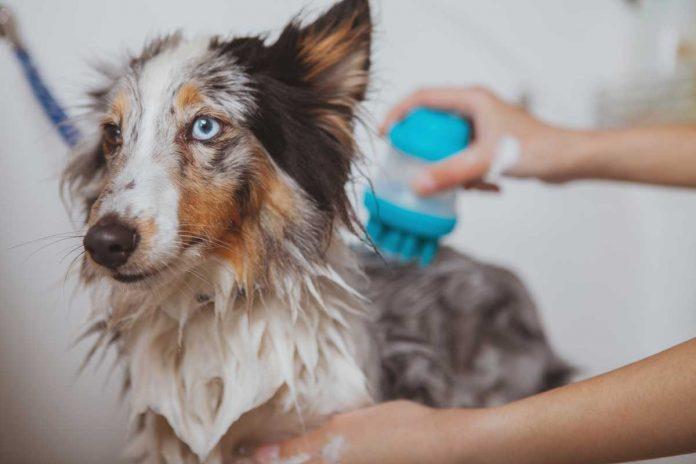 Pratici consigli per lavare il cane ed il gatto